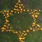 Rezultat našega rada – žuta Davidova zvijezda u našem školskom vrtu. Žuti cvjetovi podsjećaju na žute Davidove zvijezde koje su Židovi bili prisiljeni nositi pod nacističkom vlašću
