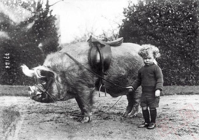 Jahač svinja (oko 1930.)